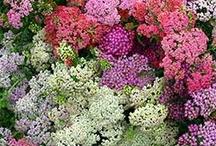 june flowers | lynnvale studios / by Andrea Gagnon