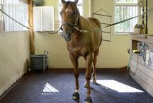 Equestrian  / by Delaney Schultz