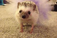 Cute / squeeee. / by Natalie Pixiedub