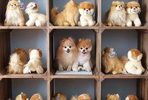 Sweet - Lovely - Animals / Sweet,  Lovely,  Animals