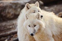 Gorgeous wildlife