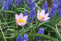 Garden or Garding or Plant