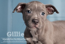 Shelter & Rescue Photography / by Danielle Neil Photography