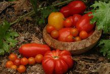 Gardening / by Jesus is my refuge
