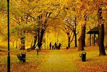 Höstträdgård / Trädgårdens höjder på hösten.