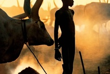 Africa / by Erato Mamakou