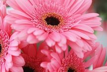 Pink Flower Guide / A collection of pink flowers
