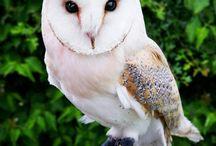 OWLS / by LUANN SAUCIER