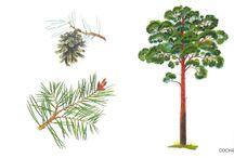 Skolträd