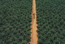 Not rain forest