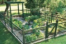 Gardening / by Kathy Whitaker