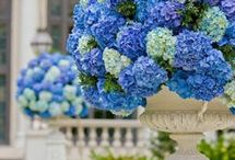 Blue Flower Arrangements & Bouquets / Blue flower arrangements, bouquets, centerpieces, event decor, corsages boutonnieres / by Fly Me To The Moon Florists