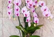 orchidea,velikonoční a vánoční kaktus