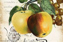 Ягоды фрукты овощи