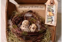 NESTS & EGGS / Nests and Eggs