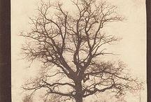 oak tattoo