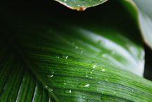 Leaves / Folhas