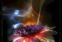 Flores Estilizadas