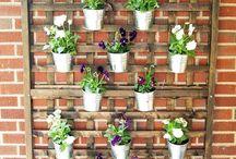 Plants an Garden