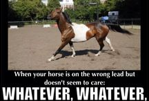 just horse...