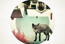 Foxy / by Joaquín Salerno Obst