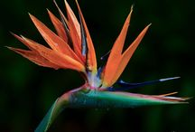 Indigenous flowers of South Africa / Flower photos