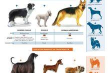 Animal training and play