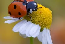 Lady bug / by Sherri Grafa