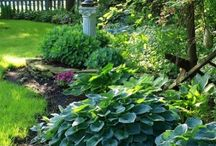 Hostas / Easy to grow Hostas! Great color for the shade. Visit us at www.bordines.com