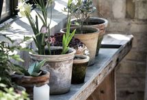 Container Gardens & Plants