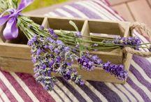 Lavender Love / by Sandy Braddy