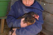 Chicken Coop / My boys love raising their chickens!  Eggs are an added bonus!!