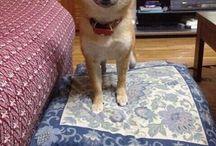 ゴン太に似てる柴犬