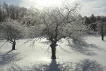 Trees of Winter / by Liesl Garner