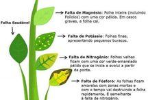 Ciências ☺ / Entendendo bem as plantas
