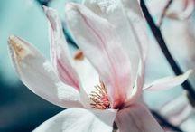 Fiori & Piante & Flowers