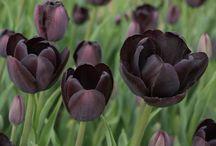 Dark coloured Flowers♥