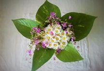 Flowers / My flowers