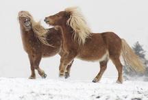 Ponis y caballos miniatura / En este tablero quiero recopilar imágenes y videos sobre razas de ponis y caballos miniatura. No se publicarán imágenes que dañen la sensibilidad como maltratos o animales enfermos por falta de cuidados. Sí se publicarán fotos de terápias y doma natural o tradicional aplicada con respeto.