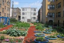 Urban Farming / by Detroit Comeback Kids
