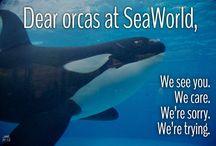 #FREETILIKUM / Free the biggest orca in captivity