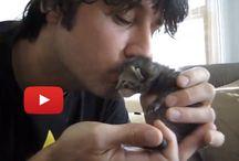 Gatos pequeños / Imágenes de gatos pequeños