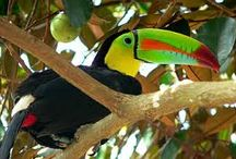 Tour in Costa Rica / Article about the importance of hiring a guide in your tours in Costa Rica