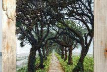 árboles con caminito