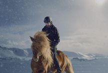 Iceland horse things