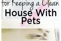 Multi-pet household / Multiple-pet home tips