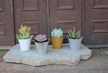 Claire's plants