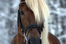 коняши