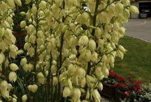 Bukiety, wianki, girlandy, kwiaty / bukiety z kwiatów ogrodowych, ślubne, dekoracyjne. Wianki z kwiatów sztucznych i żywych. Girlandy kwiatowe.