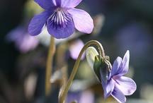 Flowers and Plants -In my Garden / by Sarah Bunch @ El Gato con Botas Nursery School
